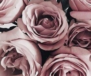 flowers, roses, and rose gold image