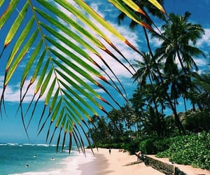 beach, beautiful, and palm trees image