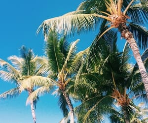 palm trees, tropical, and beach image