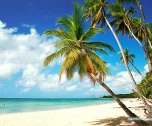 martinique and plage image