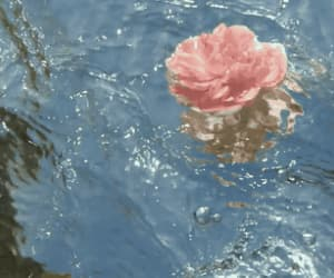 gif, rose, and wild image