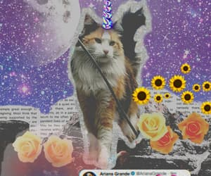 cats, ariana, and colagem image