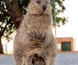 animal, mama, and bebé image