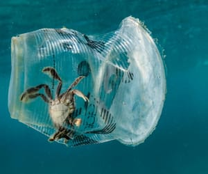 earth and plastic image