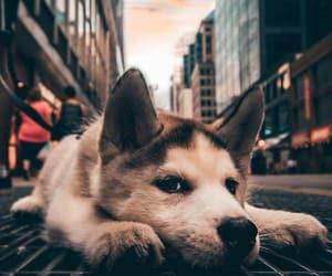 dog, animals, and city image