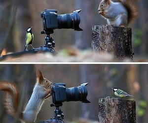 animals, animal lover, and squirrel image
