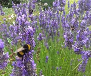 aesthetic, animal, and bee image