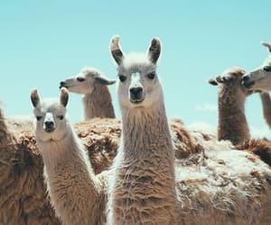 Animales, art, and animals image