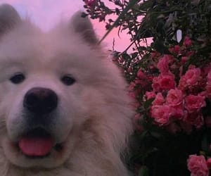 animals, dog, and flowers image