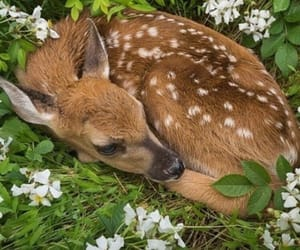 animals, cute, and deer image