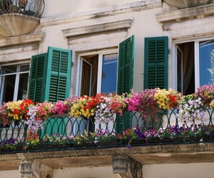 balcony, flower, and flowers image