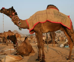 rajasthan tour, rajasthan tours, and rajasthan tour packages image