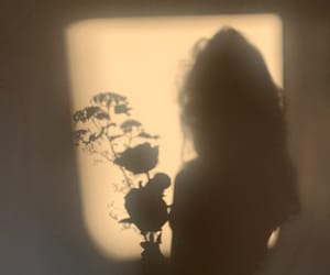 flowers, light, and shadow image