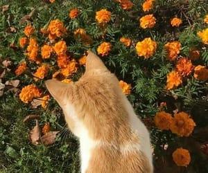 cat, flowers, and orange image