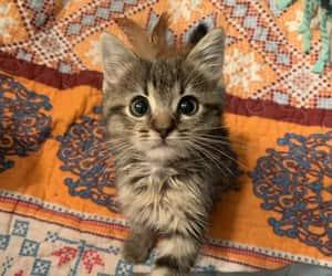 adorable, animals, and beautiful eyes image
