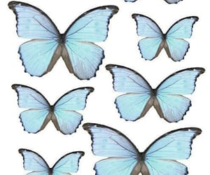 baby blue, blue, and butterfly image