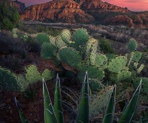 cacti, deserts, and usa image