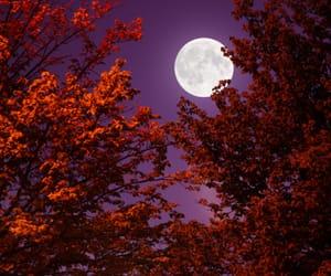 cherry blossom, Halloween, and moon image