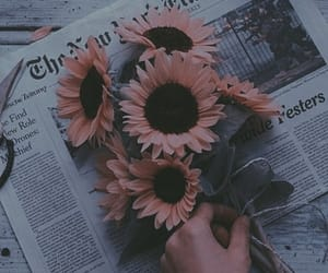 sunflower, flowers, and newspaper image