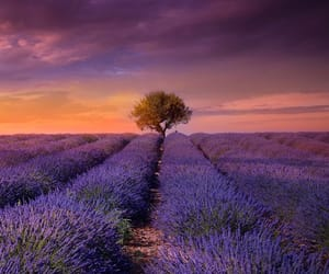 italy, lavender, and sunset image