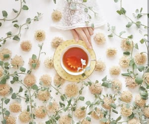 cup of tea, plants, and tea image