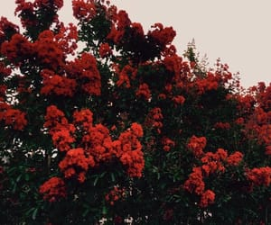 flowers, red, and aesthetic image