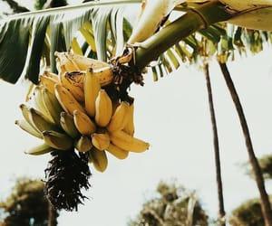 banana, fruit, and summer image
