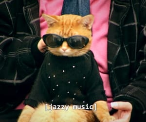 cat, funny, and music image