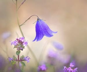 flower, purple, and wallpaper image