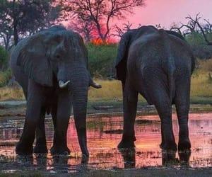 animals, elephants, and nature image