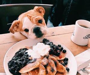 dog, food, and pancakes image