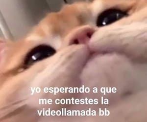 frases, Gatos, and memes image
