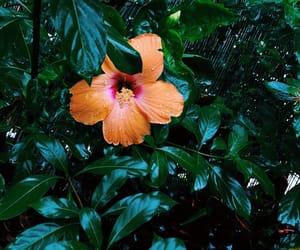 florida, flower, and garden image