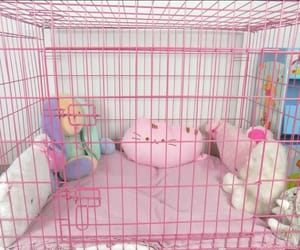 pink, kitten, and pet play image