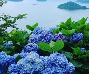 amazing, sakura, and beautiful image