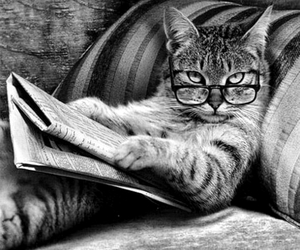 cat, glasses, and newspaper image