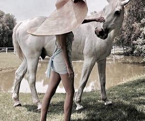 animal, horse, and fashion image