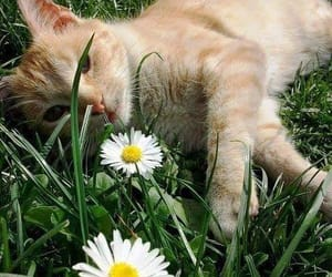 cat and daisy image