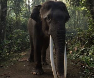 animal, elephant, and jungle image