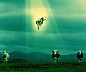 alien, cow, and ufo image