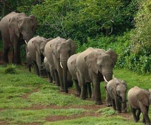 elephants, animals, and family image
