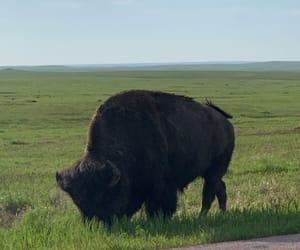 animal, badlands, and wildlife image