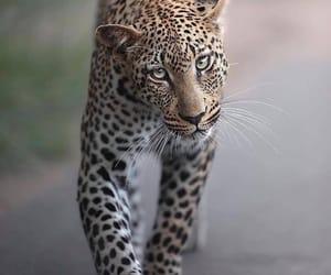animal, travel, and world image