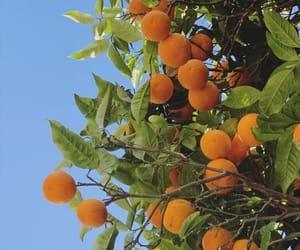 blue skies, mallorca, and orange tree image
