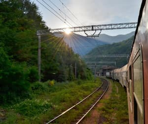 forest, railway, and railways image