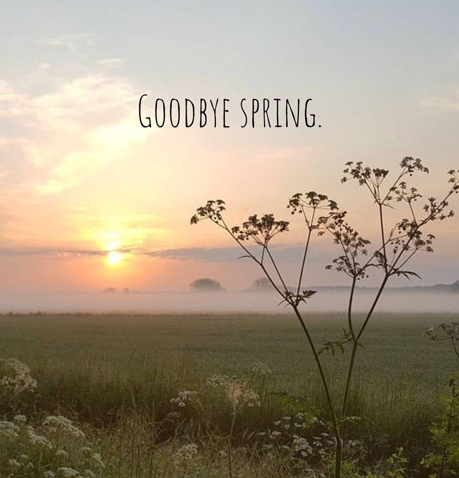 goodbye, light, and spring image