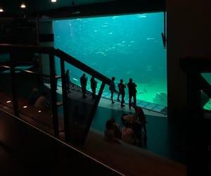 aesthetic, aquarium, and beautiful image