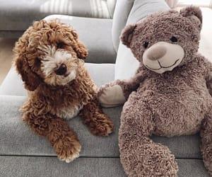 dog, cute, and bear image