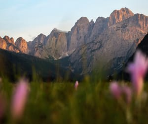 Alps, explore, and flowers image