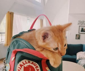 animals, backpack, and cats image